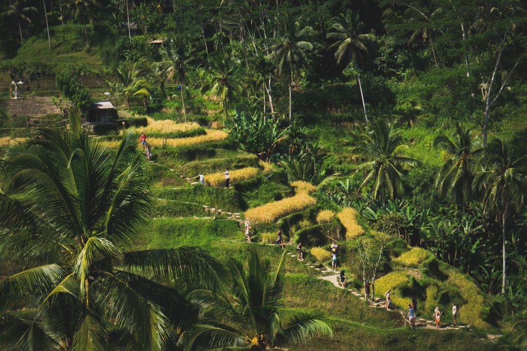 Berlibur Sekaligus Berpetualang di Alam! Inilah 8 Rekomendasi Ekowisata di Bali yang Wajib Dikunjungi, Motor Bali Rental - Sewa Motor di Ubud