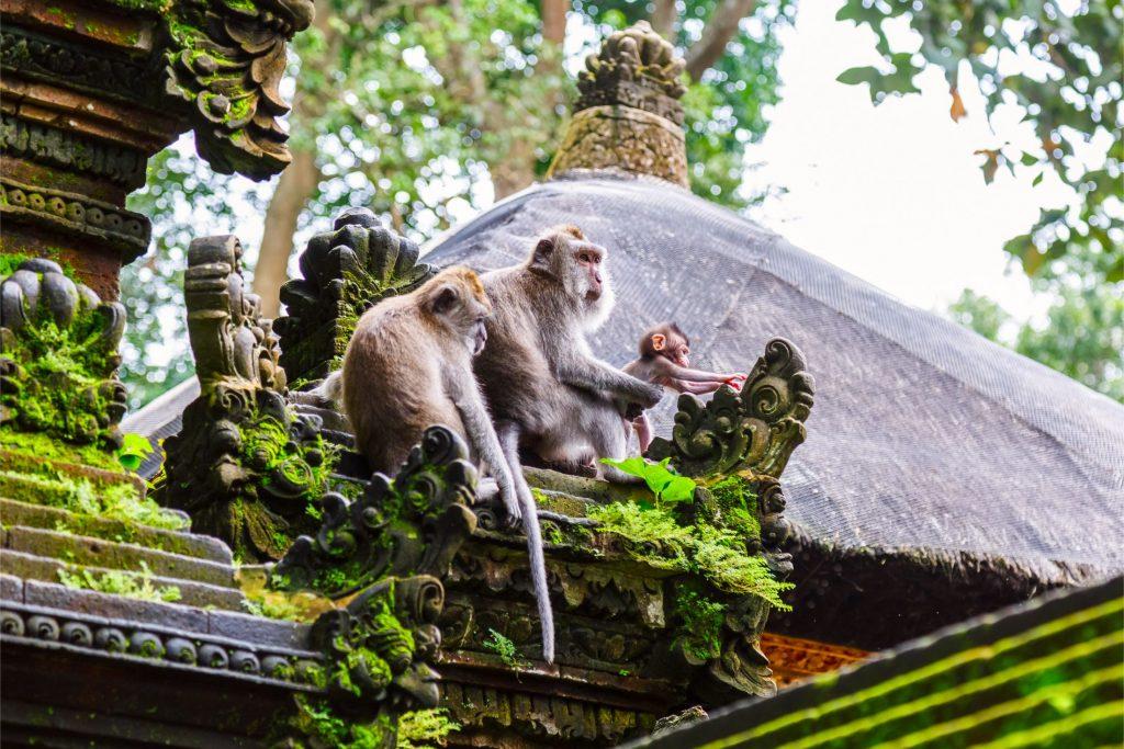 Destinasi Wisata Bali di Ubud, Dijamin Nggak Mau Pulang, Motor Bali Rental - Sewa Motor di Ubud