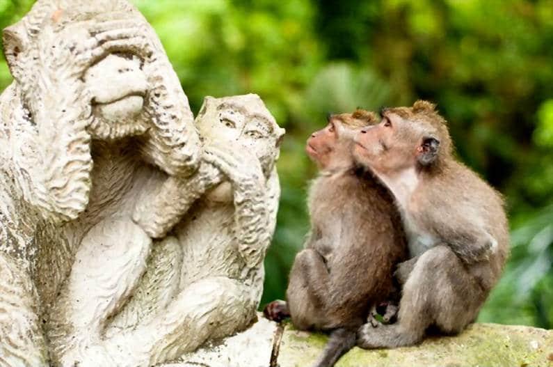Monkey Forest Ubud - 25 Tempat Wisata Instagramable di Ubud Bali Super Cantik