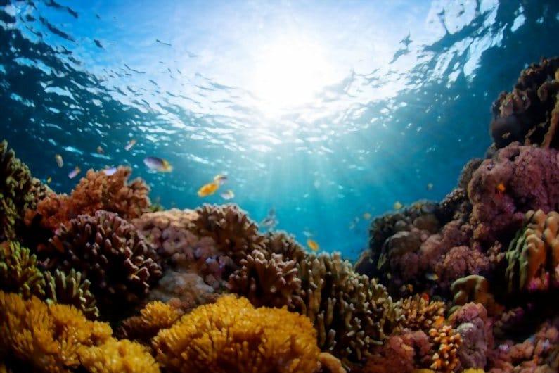 Odyssey Submarine Bali | Arungi Wisata Bawah Laut Menakjubkan, Motor Bali Rental - Sewa Motor di Ubud