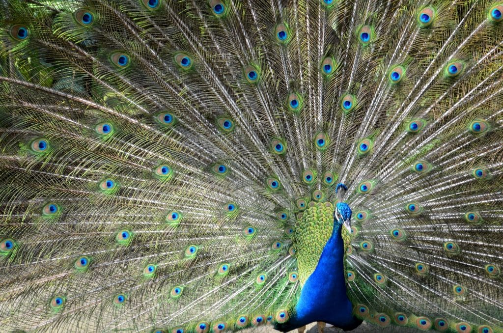 Ingin Liburan Seru dan Edukatif? Datang Saja ke Objek Wisata Bali Bird Park
