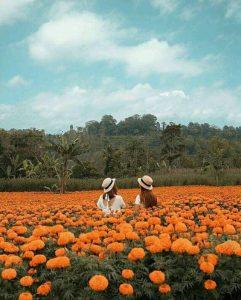 gemitir garden wisata bali instagramable 241x300 - Sewa Motor Bali