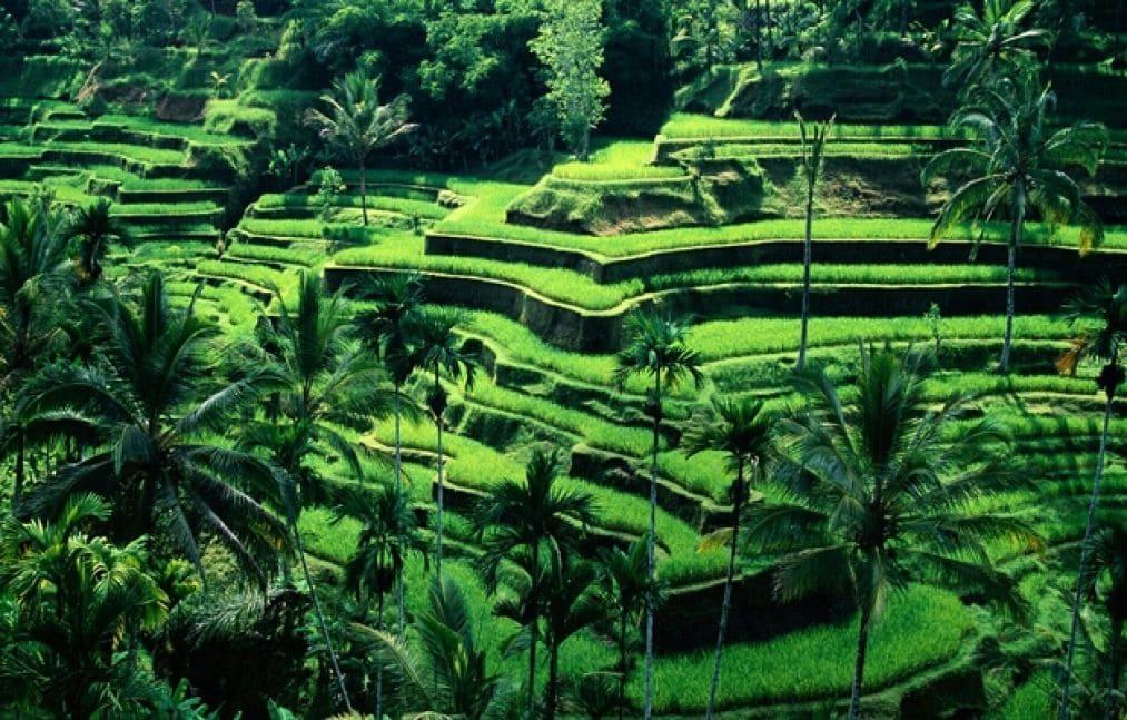 rice terrace tegalalang - Hal Terbaik Di Ubud Wajib Di Lakukan Saat Berada Di Ubud
